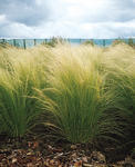 Stipa Pony Tails 100 pellets