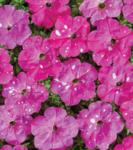 Petunia mf. Dot Star Deep Pink F1 250 pelet