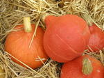 Tykev Hokkaido Orange 25g