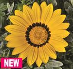 Gazania Frosty Kiss Yellow F1 200s