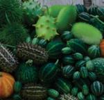 Cucumis Deco-Fruits Mix 4g