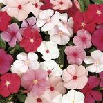Catharanthus r.Mediterranean Mix 250 seeds