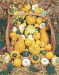 Cucurbita Small type mix 5g