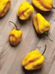 Capsicum chinense Habanero Lemon 250s