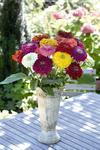 Zinnia elegans Giant Mix 250s