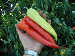 Pepper Semaroh 10g