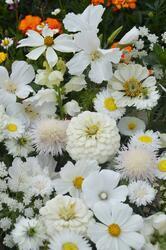 White shades mixture 50g