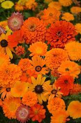 Orange shades mixture 100g