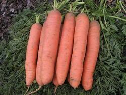 Carrot Rubína 10g