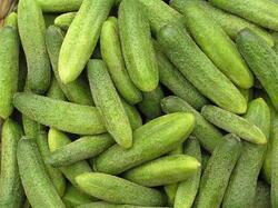 Cucumber Gherkin Karolina F1 10g
