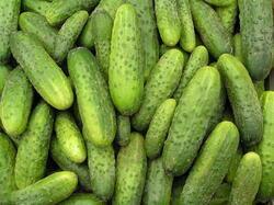 Cucumber Gherkin Jitka F1 10g