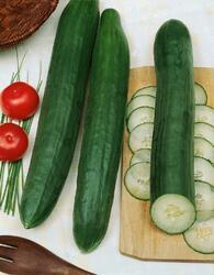 Salad cucumber Superstar F1 5g