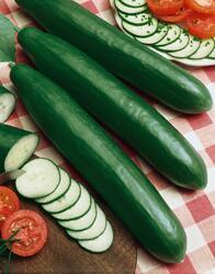 Salad cucumber Saladin F1 5g