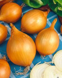 Onion Všetana (yellow) 20g
