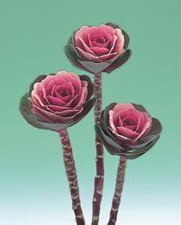 Brassica o. Crane Pink F1 250s