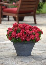 Petunia h. Double Cascade Red F1 250 pelet