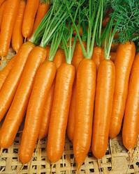Carrot Karotina 10g