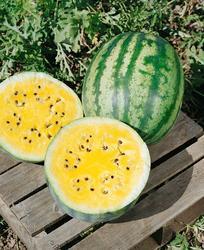 Meloun vodní Primagold F1 2g