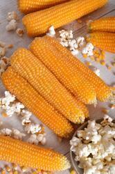 Popcorn maize Nana F1 50g