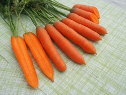 Carrot Stupicka k rychleni 10g
