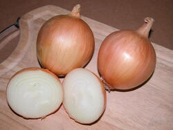 Onion Unico F1 10g