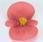 Begonia semp. Sprint Rose F1 1000 pelet - 1/3