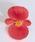Begonia semp. Sprint Scarlet F1 1000 pelet - 1/3