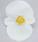 Begonia semp. Sprint White F1 1000 pelet - 1/2