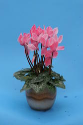 Cyclamen persicum mini Helga 100 seeds