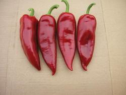 Paprika roční Lydia 10g - 2