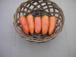 Paprika roční Hamík 1g - 2