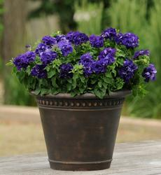 Petunia h. Double Cascade Blue F1 250 pelet - 2