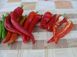 Pepper (hot) Poseidon 5g - 2